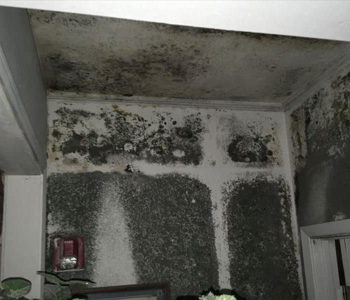 Mold Remediation in Humble, TX Before