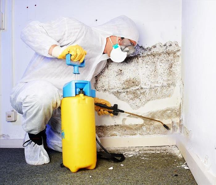 Mold Remediation Kingwood and Humble Home Health: DIY Mold Removal