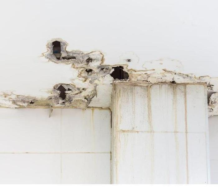 Commercial Understand Mold Growth for Prevention
