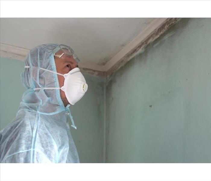 Mold remediation specialist inspects walls