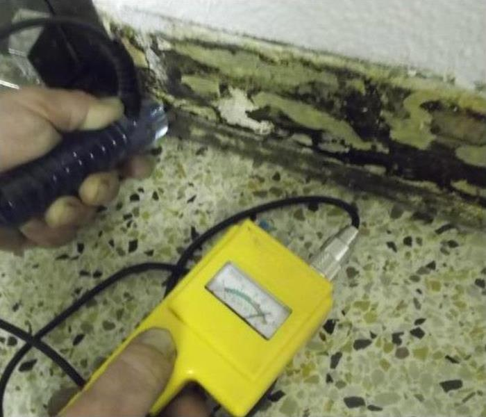 Why SERVPRO Will Commercial Insurance Cover Mold?